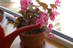 Цветок бака Стоковые Изображения RF