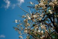 Цветок бархата в поле горы стоковое изображение rf