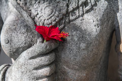 Цветок Бали стоковые фото
