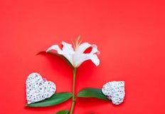 Цветок белой лилии с декоративными сердцами на предпосылке коралла декор праздничный стоковые фотографии rf
