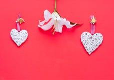 Цветок белой лилии с декоративными сердцами на предпосылке коралла декор праздничный стоковое изображение