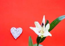 Цветок белой лилии с декоративными сердцами на предпосылке коралла декор праздничный стоковое фото rf