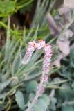 Цветок ботанических садов Денвера Стоковое фото RF