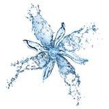 цветок брызгает воду Стоковые Изображения
