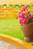 цветок бугинвилии Стоковые Фотографии RF