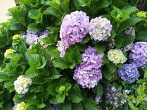 Цветок Буш Стоковое Изображение RF