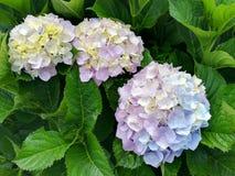 Цветок Буш Стоковые Изображения