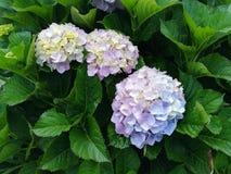 Цветок Буш Стоковые Изображения RF