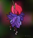Цветок вектора декоративный fuchsia тропический Стоковая Фотография RF