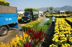 Цветок весны, Вьетнам Tet, азиатский фермер Стоковые Изображения RF