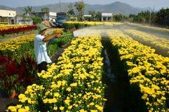 Цветок весны, Вьетнам Tet, азиатский фермер Стоковое фото RF