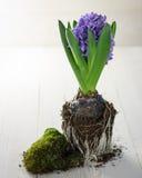 Цветок весны в земле Стоковое Фото