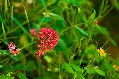 Цветок весны в траве Стоковое Фото