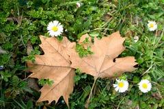 Цветок весны и листья осени Стоковое фото RF