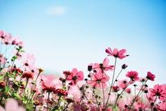 Цветок весны Стоковые Фото