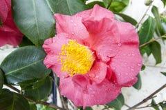 Цветок весны Стоковые Фотографии RF