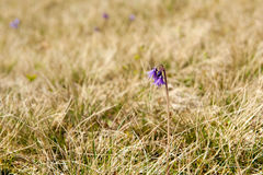 Цветок весны Стоковое Фото