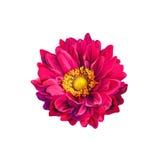 Цветок весны Mona Лизы красочный Стоковая Фотография