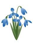 Цветок весны - snowdrop Стоковое Изображение RF