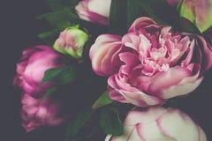 Цветок винтажного пиона розовый Стоковая Фотография