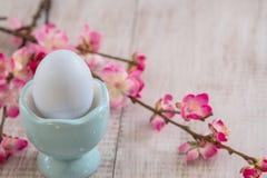 Цветок вишневого цвета разветвляет с пастельным голубым пасхальным яйцом в например Стоковая Фотография