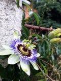 Цветок влюбленности стоковые фотографии rf