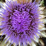 Цветок внутри Стоковая Фотография