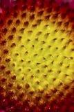 цветок внутрь Стоковое фото RF