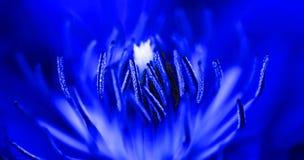 цветок внутрь Стоковые Изображения