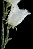 цветок воздушных пузырей Стоковые Изображения RF