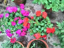 Цветок впечатления Стоковые Фотографии RF