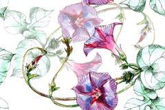 Цветок вьюнка, акварель, делает по образцу безшовное Стоковое Изображение
