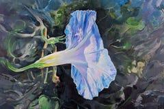 Цветок вьюнка лиловый и голубой Стоковое фото RF