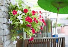 Цветок в баке смертной казни через повешение Стоковое Изображение