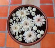 Цветок в баке Стоковые Изображения