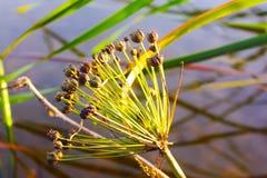 Цветок в болоте стоковые фотографии rf