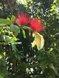 Цветок в ботаническом саде Стоковые Изображения