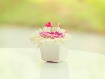 Цветок в вазе стоковые фотографии rf