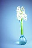 Цветок в вазе. Стоковая Фотография RF