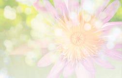 Цветок в винтажном стиле цвета и предпосылке нерезкости bokeh Стоковое Изображение RF