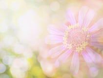 Цветок в винтажном цвете Стоковая Фотография RF