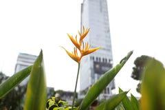Цветок в городе Стоковое фото RF