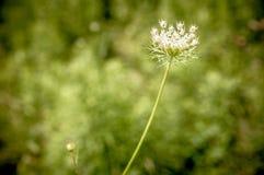 Цветок в графе тюкует парк Стоковые Фотографии RF