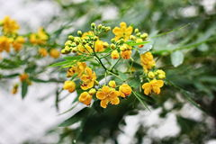 Цветок в летнем дне Стоковое Фото