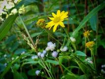 Цветок в джунглях Стоковое Фото