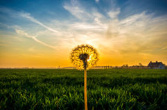 Цветок в заходе солнца Стоковая Фотография