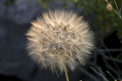 Цветок в заходе солнца Стоковая Фотография RF