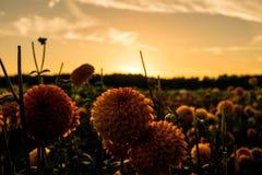 Цветок в заходе солнца стоковые изображения