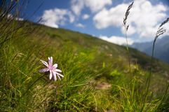 Цветок в зеленой траве Стоковые Фотографии RF