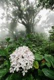 Цветок в зеленом дождевом лесе стоковые изображения rf